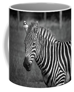 Coffee Mug featuring the photograph Zebra by Trace Kittrell