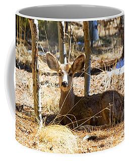 Mule Deer In The Pike National Forest Coffee Mug