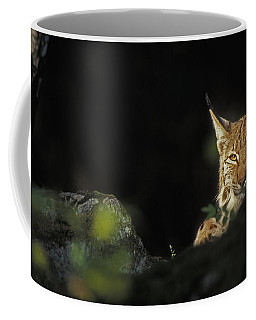 151001p105 Coffee Mug by Arterra Picture Library