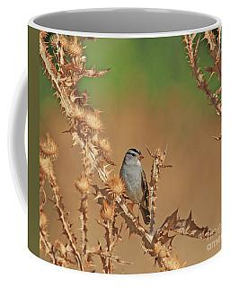 White-crowned Sparrow Coffee Mug