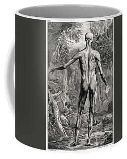 18th Century Anatomical Engraving Coffee Mug by Science Source