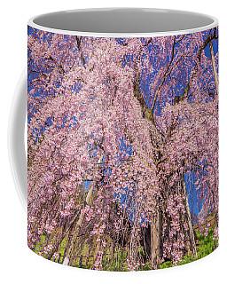 Coffee Mug featuring the photograph Miharu Takizakura Weeping Cherry20 by Tatsuya Atarashi