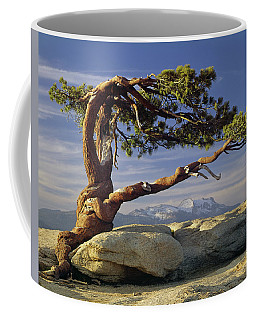 1m6701 Historic Jeffrey Pine Sentinel Dome Yosemite Coffee Mug