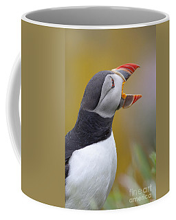 Atlantic Puffin - Scotland Coffee Mug