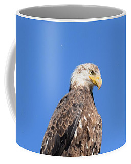 Bald Eagle Juvenile Perched Coffee Mug