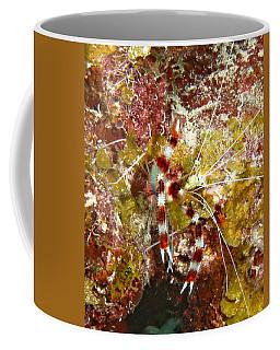 Banded Coral Shrimp Coffee Mug