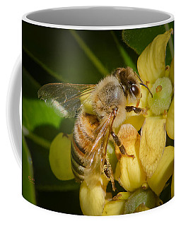 Coffee Mug featuring the photograph Bees Gathering From Pittosporum Flowers by Jim Thompson