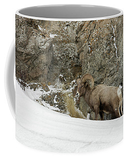 Coffee Mug featuring the photograph Bighorn by Ronnie and Frances Howard