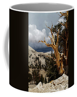 Bristlecone Pine 4 Coffee Mug