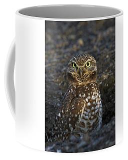 Burrowing Owl Coffee Mug by Doug Herr
