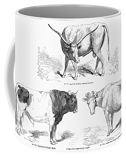 Cattle Breeds, 1856 Coffee Mug