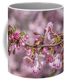Coffee Mug featuring the photograph Cherry Blossoms by Cathy Donohoue