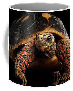 Close-up Of Red-footed Tortoises, Chelonoidis Carbonaria, Isolated Black Background Coffee Mug