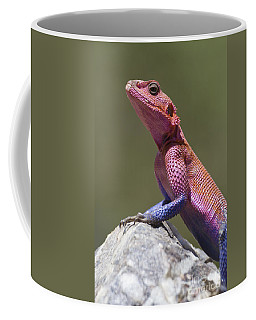 Colorful Rock Agama Coffee Mug