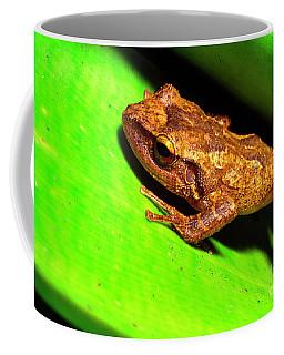 Coqui In Bromeliad Coffee Mug