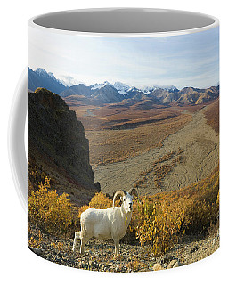 Dalls Sheep In Denali Coffee Mug