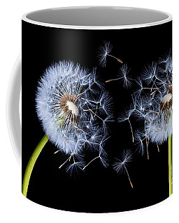 Dandelion On Black Background Coffee Mug by Bess Hamiti