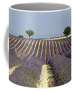 Field Of Lavender. Provence Coffee Mug