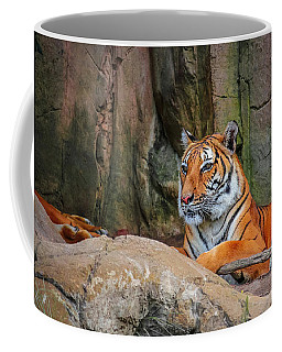 Coffee Mug featuring the photograph Fort Worth Zoo Tiger by Robert Bellomy