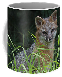 Gray Fox In The Grass Coffee Mug