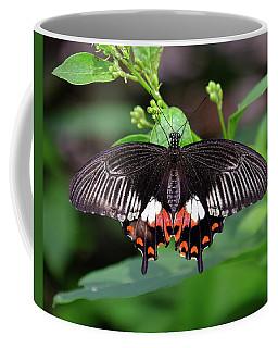 Great Mormon Butterfly Coffee Mug