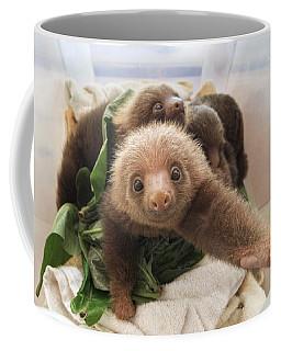 Hoffmanns Two-toed Sloth Choloepus Coffee Mug