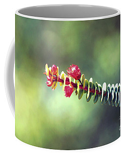 Coffee Mug featuring the photograph Kings Park Vi by Cassandra Buckley