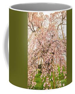 Coffee Mug featuring the photograph Miharu Takizakura Weeping Cherry03 by Tatsuya Atarashi