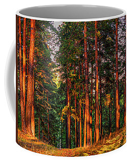 Coffee Mug featuring the photograph Morning Light  by Vladimir Kholostykh