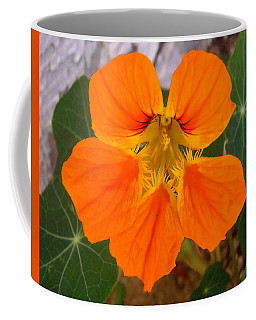 Coffee Mug featuring the photograph Nasturtium by Stephanie Moore
