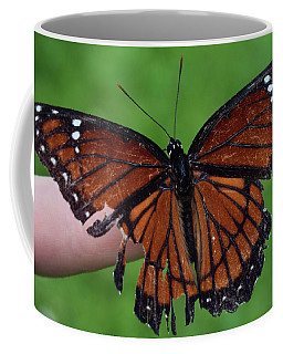 Viceroy Butterfly Coffee Mug