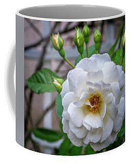 White Rose Coffee Mug by Jane Luxton