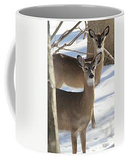 White Tailed Deer Smithtown New York Coffee Mug by Bob Savage