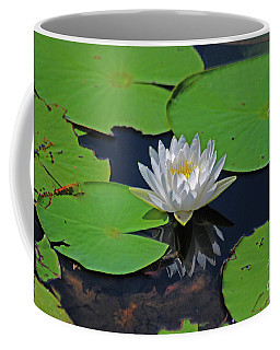 Coffee Mug featuring the photograph 2- White Water Lily by Joseph Keane