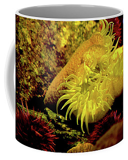 Sea Urchins Coffee Mug