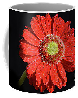 Coffee Mug featuring the photograph Red Gerber by Elvira Ladocki
