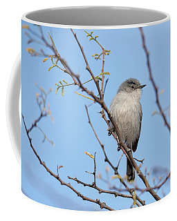 Black-tailed Gnatcatcher Coffee Mug