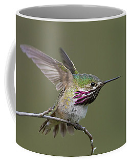 Calliope Hummingbird Coffee Mug by Doug Herr