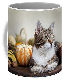 Cat And Pumpkins Coffee Mug