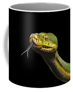 Green Tree Python. Morelia Viridis. Isolated Black Background Coffee Mug