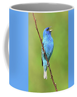 Indigo Bunting Coffee Mug by Alan Lenk