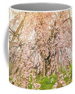 Coffee Mug featuring the photograph Miharu Takizakura Weeping Cherry04 by Tatsuya Atarashi