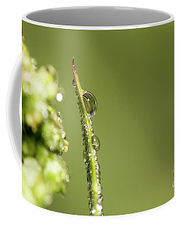 Water Drops On The Grass Coffee Mug