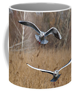 Coffee Mug featuring the photograph Flying Seagulls by Odon Czintos
