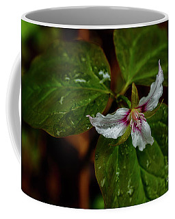 Coffee Mug featuring the photograph Painted Trillium  by Thomas R Fletcher