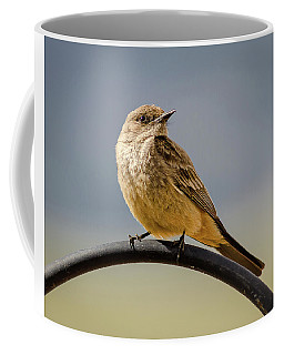 Say's Phoebe Coffee Mug