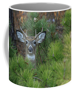 White Tailed Deer Calverton New York Coffee Mug