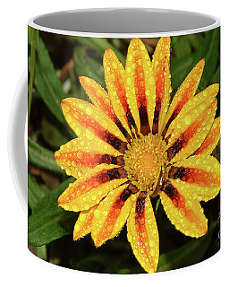 Yellow Gazania Coffee Mug