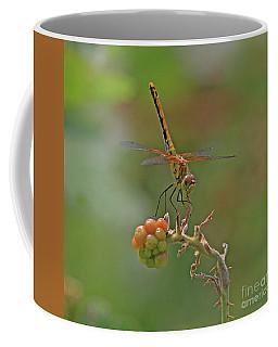 Band-winged Meadowhawk Coffee Mug