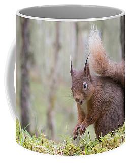 Red Squirrel - Scottish Highlands #8 Coffee Mug